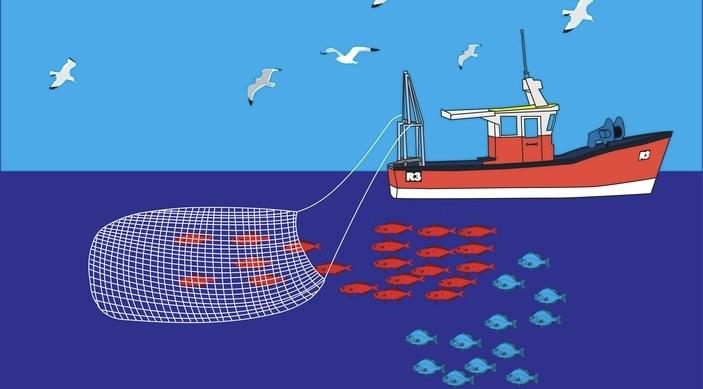 What Fishing can teach us about Sales Productivity
